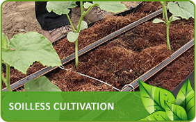 Soilless Cultivation