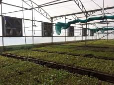 Nilgiri Tissue Plants